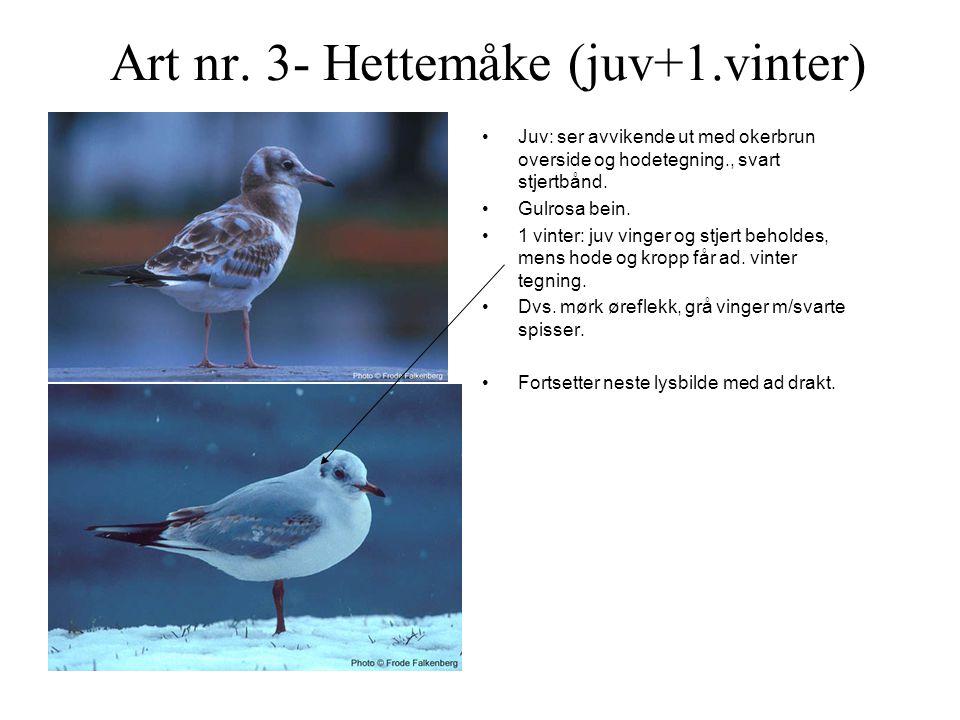 Art nr.