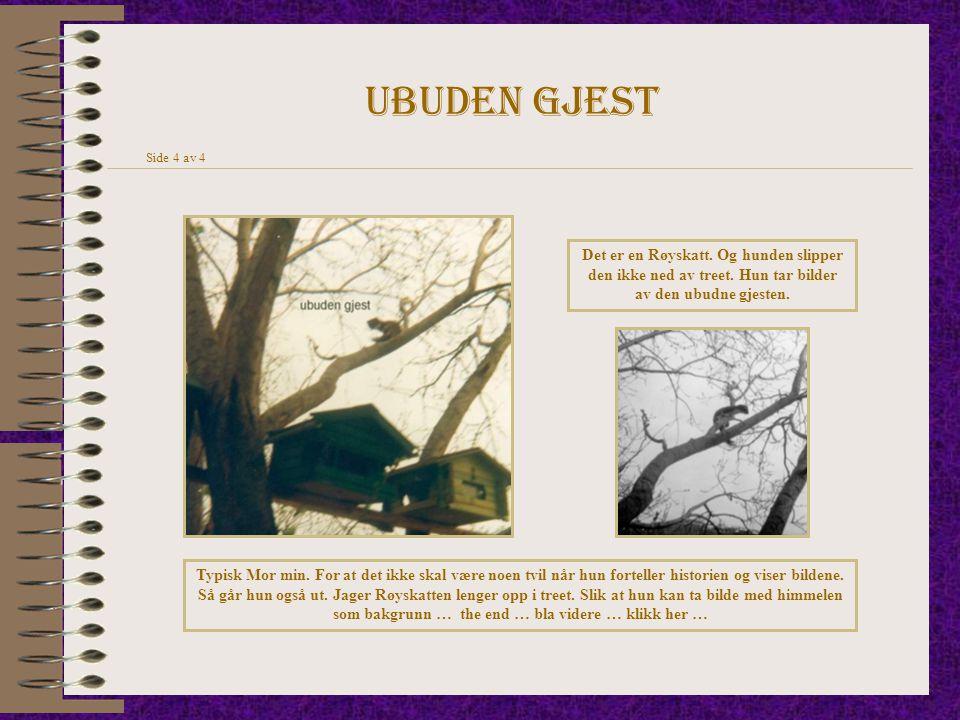 Ubuden gjest Side 4 av 4 Det er en Røyskatt. Og hunden slipper den ikke ned av treet. Hun tar bilder av den ubudne gjesten. Typisk Mor min. For at det