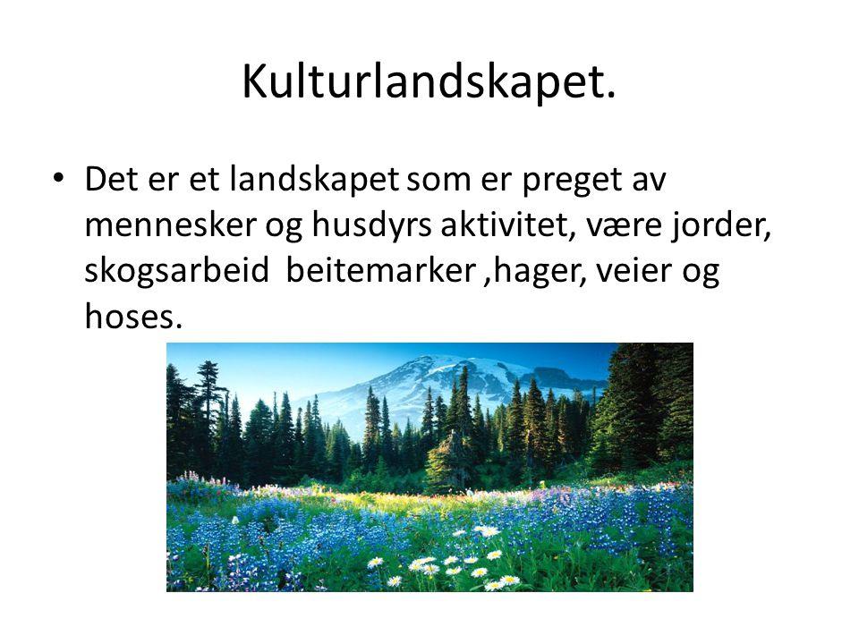 Kulturlandskapet.