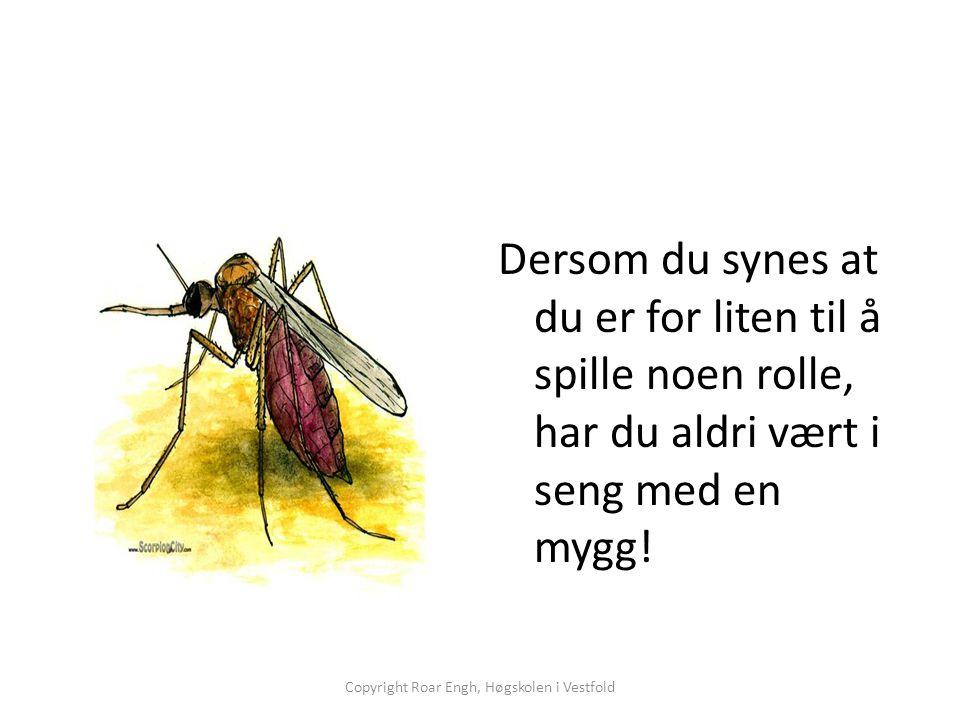 Dersom du synes at du er for liten til å spille noen rolle, har du aldri vært i seng med en mygg! Copyright Roar Engh, Høgskolen i Vestfold