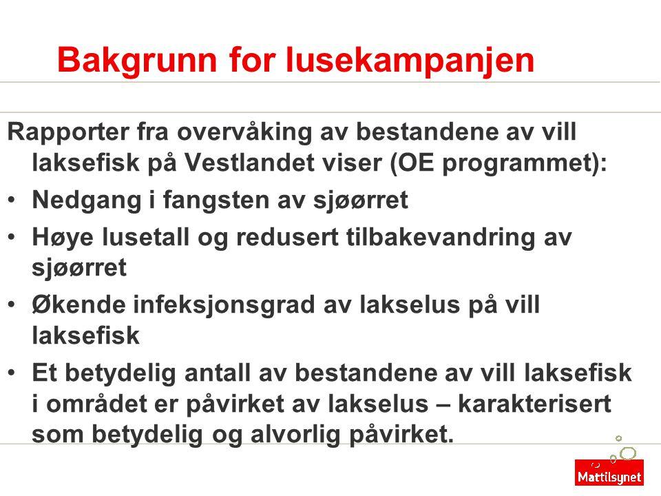 Bakgrunn for lusekampanjen Rapporter fra overvåking av bestandene av vill laksefisk på Vestlandet viser (OE programmet): •Nedgang i fangsten av sjøørr