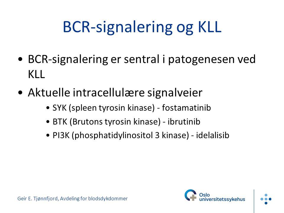 Geir E. Tjønnfjord, Avdeling for blodsdykdommer BCR-signalering og KLL •BCR-signalering er sentral i patogenesen ved KLL •Aktuelle intracellulære sign
