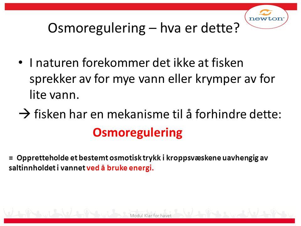 Osmoregulering – hva er dette? • I naturen forekommer det ikke at fisken sprekker av for mye vann eller krymper av for lite vann.  fisken har en meka