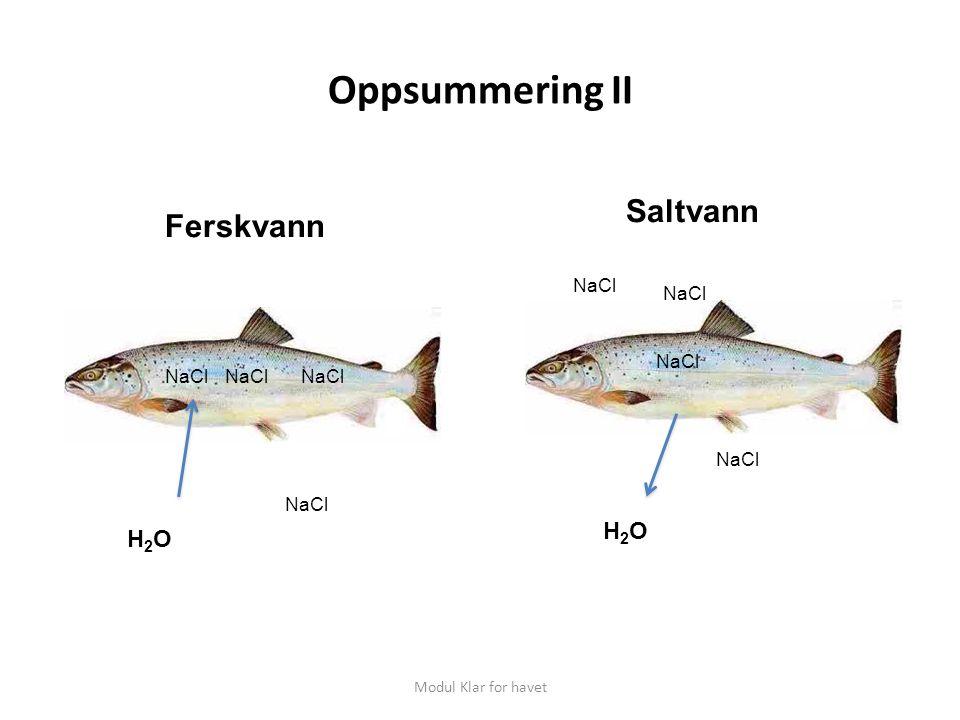 Oppsummering II Modul Klar for havet Ferskvann Saltvann H2OH2O H2OH2O NaCl