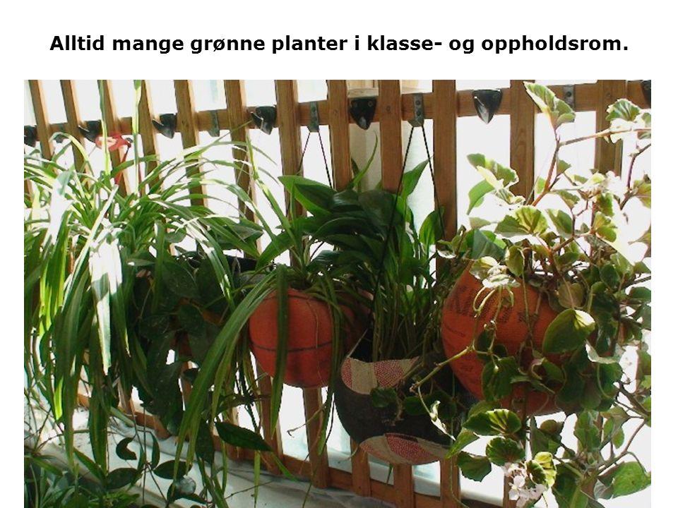 Alltid mange grønne planter i klasse- og oppholdsrom.