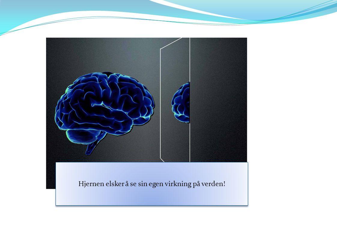 Hjernen elsker å se sin egen virkning på verden!