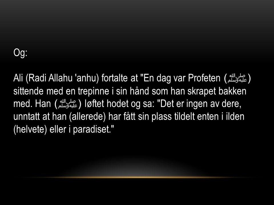 Og: Ali (Radi Allahu anhu) fortalte at En dag var Profeten ( ﷺ ) sittende med en trepinne i sin hånd som han skrapet bakken med.