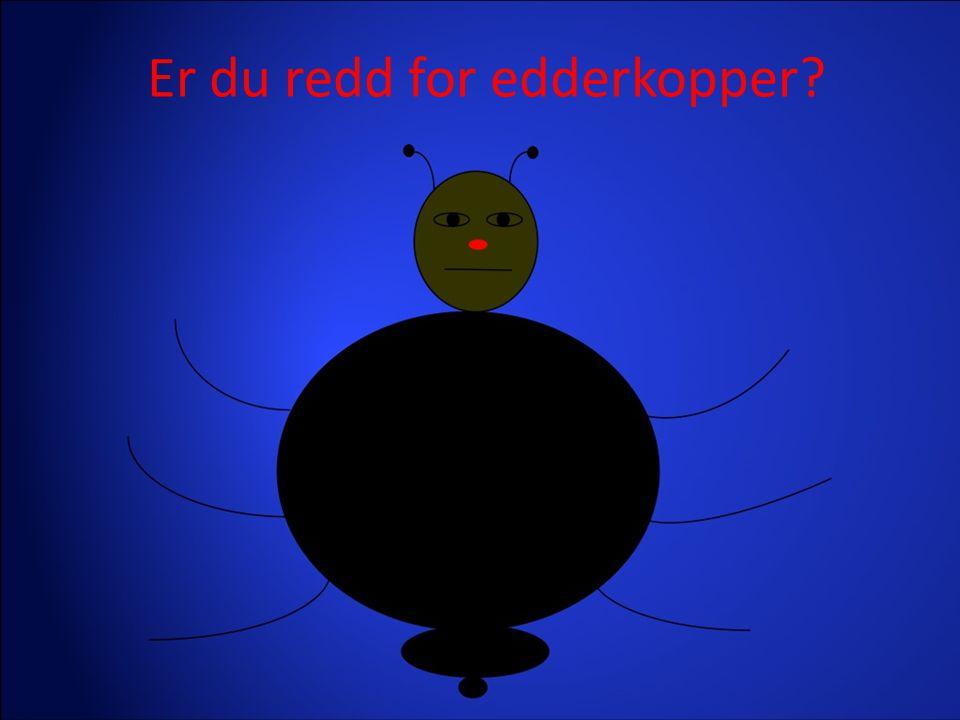 Er du redd for edderkopper?