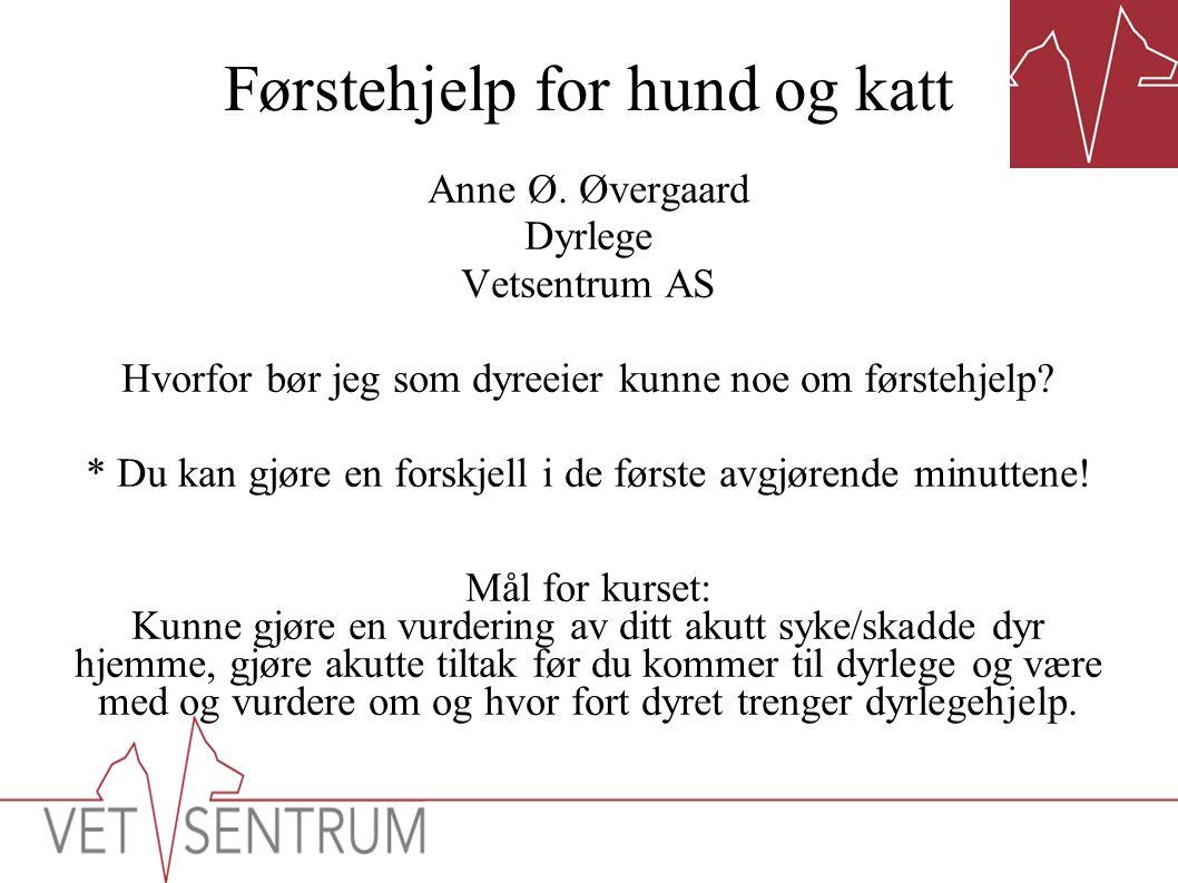 Førstehjelp for hund og katt Anne Ø. Øvergaard Dyrlege Vetsentrum AS Hvorfor bør jeg som dyreeier kunne noe om førstehjelp? * Du kan gjøre en forskjel
