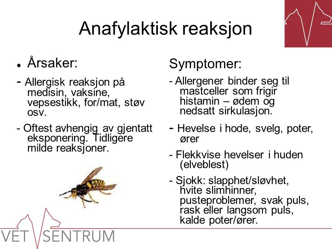 Anafylaktisk reaksjon  Årsaker: - Allergisk reaksjon på medisin, vaksine, vepsestikk, for/mat, støv osv. - Oftest avhengig av gjentatt eksponering. T