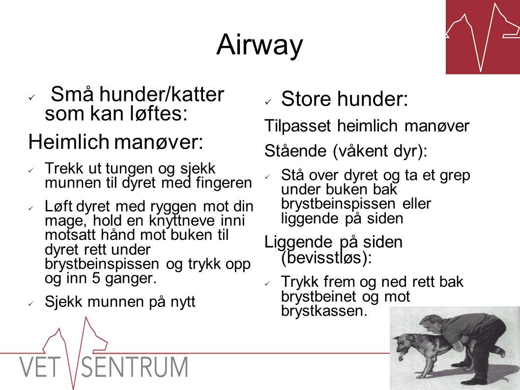 Airway  Små hunder/katter som kan løftes: Heimlich manøver:  Trekk ut tungen og sjekk munnen til dyret med fingeren  Løft dyret med ryggen mot din
