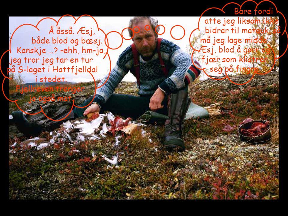 Å åsså. Æsj, både blod og bæsj. Kanskje …? -ehh, hm-ja, jeg tror jeg tar en tur på S-laget i Hattfjelldal i stedet. Fjellreven trenger jo også mat. Ba
