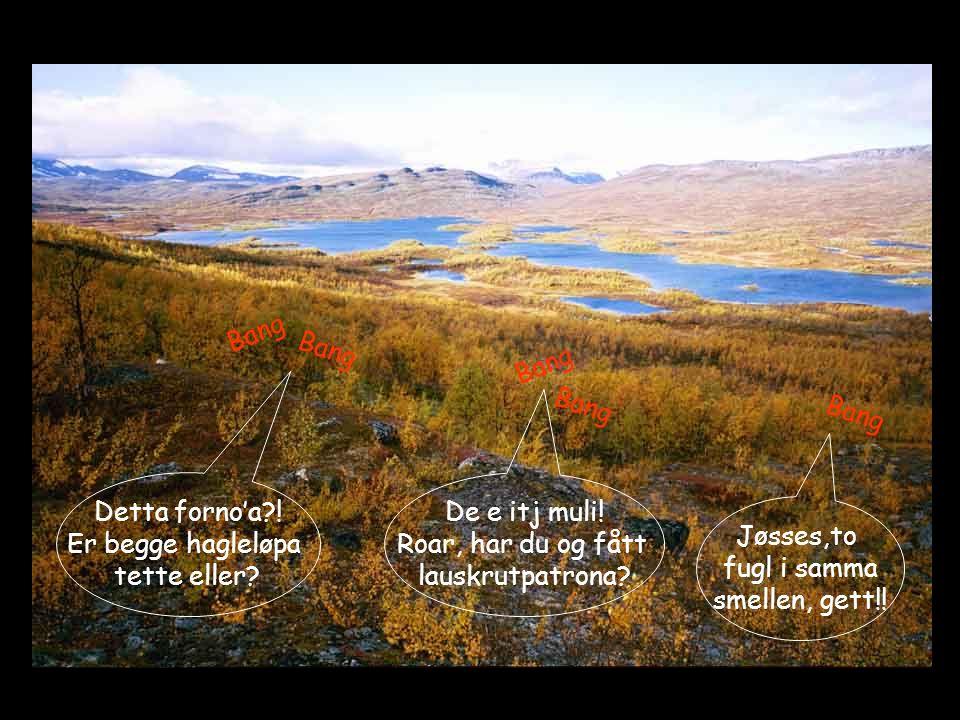 Lite folk i fjellet, men etter et par dager treffer jeg en fjell-lapp på svensk side.