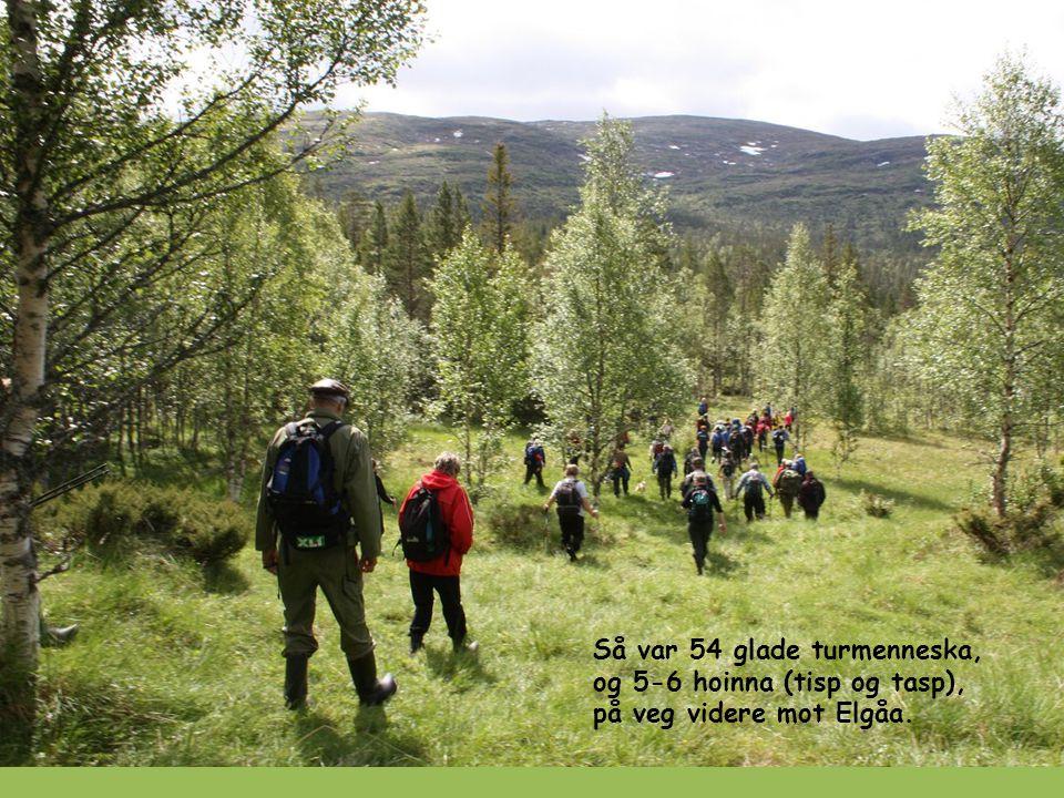 Så var 54 glade turmenneska, og 5-6 hoinna (tisp og tasp), på veg videre mot Elgåa.