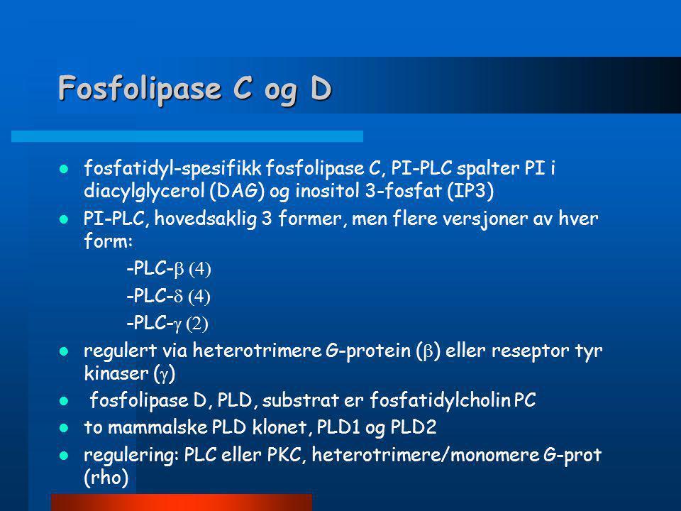  Funksjon: -de/re-acylering av membr. fosfolipider -eicosanoid, lPC-produksjon: prostaglandiner, leukotriener, lysofosfatid-syre (LPA)  Regulering a