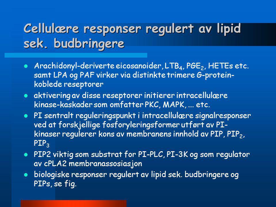 Forskjellige fosforyleringsformer av fosfatidylinositol (PI)
