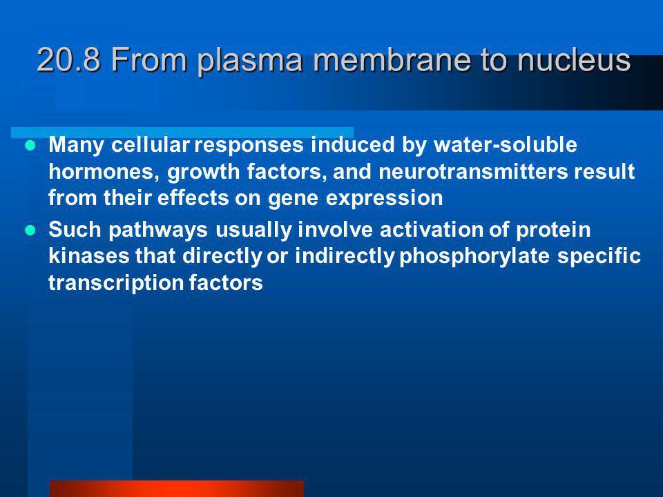 Fem paralelle signalveier aktivert av G-protein reseptorer, reseptor tyrosin kinaser, eller begge