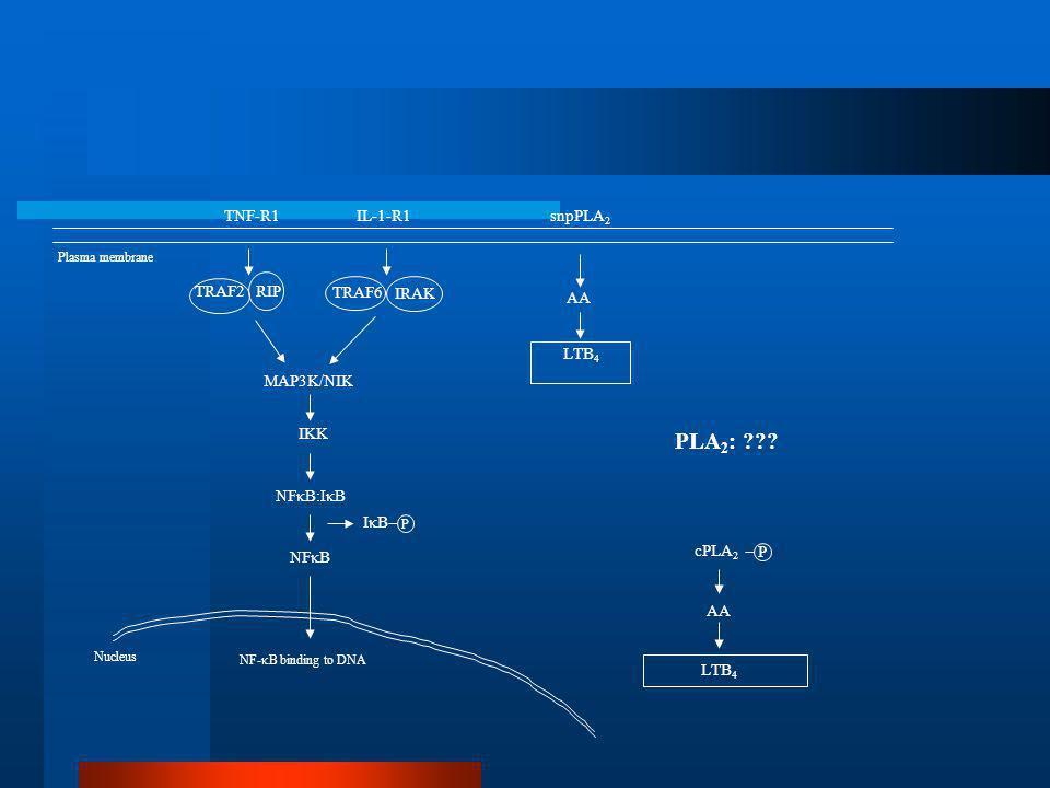 Secretory group IIa PLA2 is overexpressed in differentiated keratinocytes in psoriatic skin Andersen et al., Inflammation, 18,1,1994.
