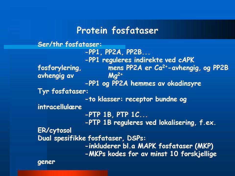 Protein fosfataser Ser/thr fosfataser: -PP1, PP2A, PP2B...