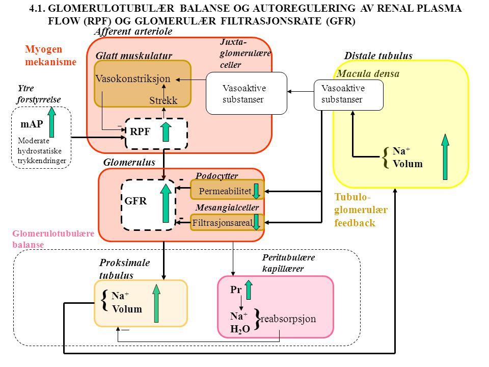 mAP (mmHg) 40 80 120 160 200 200 400 600 mL/min Autoregulering av Renal Plasma Flow (RPF) og Glomerulær FiltrasjonsRate (GFR) For å motvirke effekten