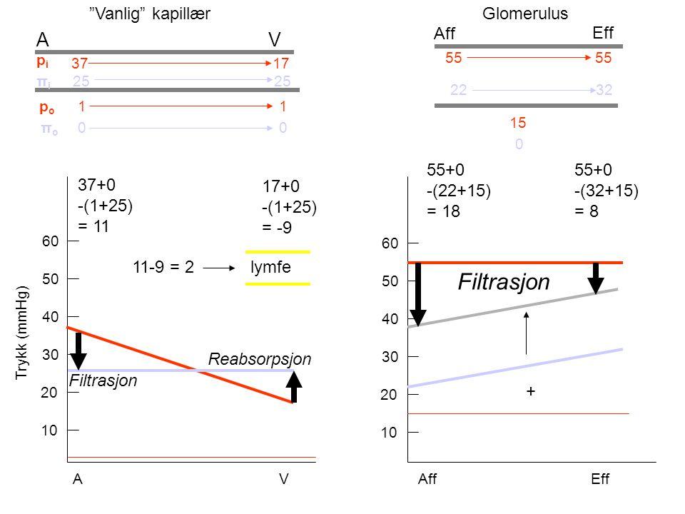 10 20 30 40 50 60 10 20 30 40 50 60 pipi 37 17 πiπi 25 πoπo 0 A V Trykk (mmHg) A V 11-9 = 2lymfe Aff Eff 55 22 32 0 15 37+0 -(1+25) = 11 Filtrasjon 17+0 -(1+25) = -9 Reabsorpsjon 55+0 -(22+15) = 18 55+0 -(32+15) = 8 Filtrasjon Aff Eff Vanlig kapillærGlomerulus + popo 1