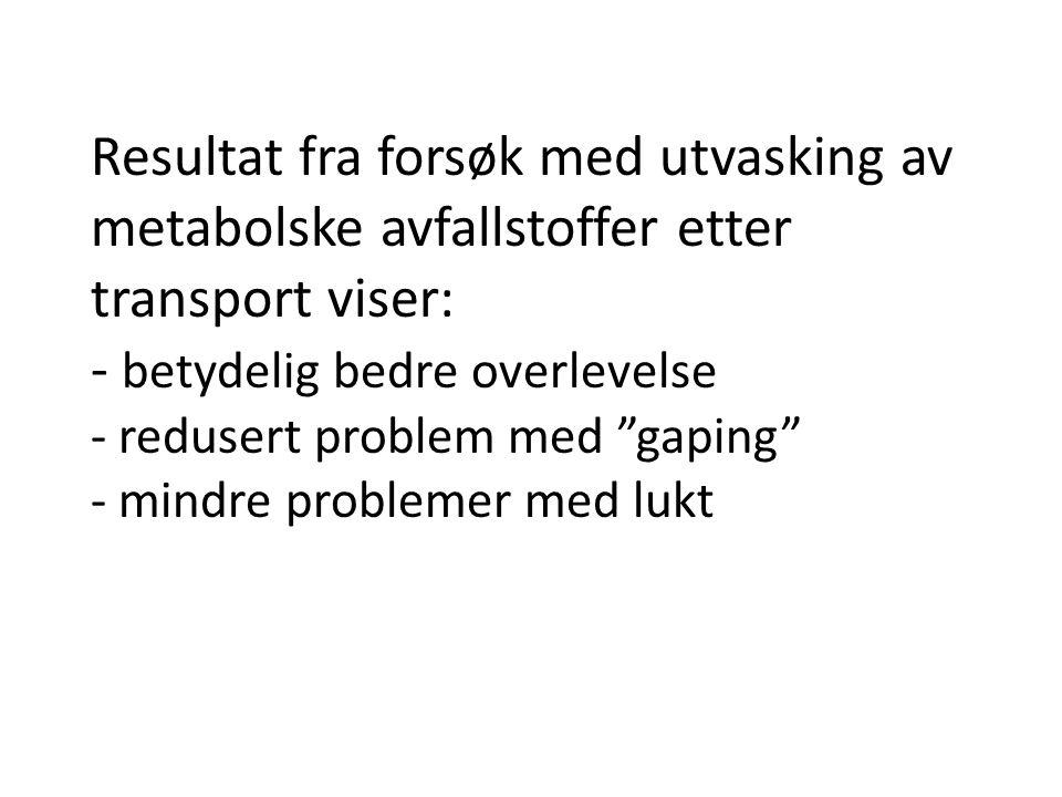 """Resultat fra forsøk med utvasking av metabolske avfallstoffer etter transport viser: - betydelig bedre overlevelse - redusert problem med """"gaping"""" - m"""