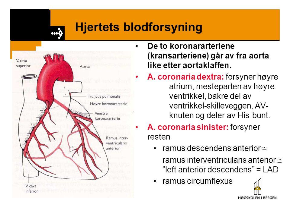 Hjertets blodforsyning •De to koronararteriene (kransarteriene) går av fra aorta like etter aortaklaffen. •A. coronaria dextra: forsyner høyre atrium,