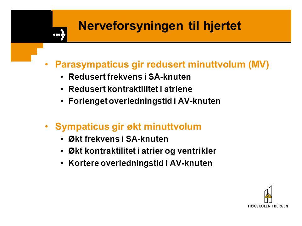 Nerveforsyningen til hjertet •Parasympaticus gir redusert minuttvolum (MV) •Redusert frekvens i SA-knuten •Redusert kontraktilitet i atriene •Forlenge