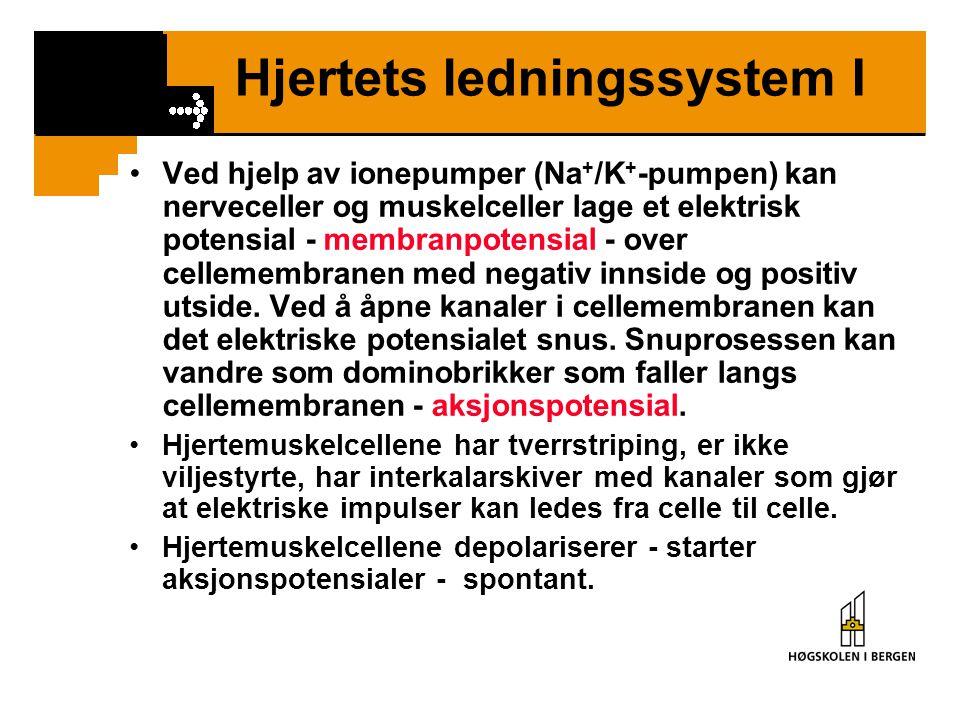 Hjertets ledningssystem I •Ved hjelp av ionepumper (Na + /K + -pumpen) kan nerveceller og muskelceller lage et elektrisk potensial - membranpotensial
