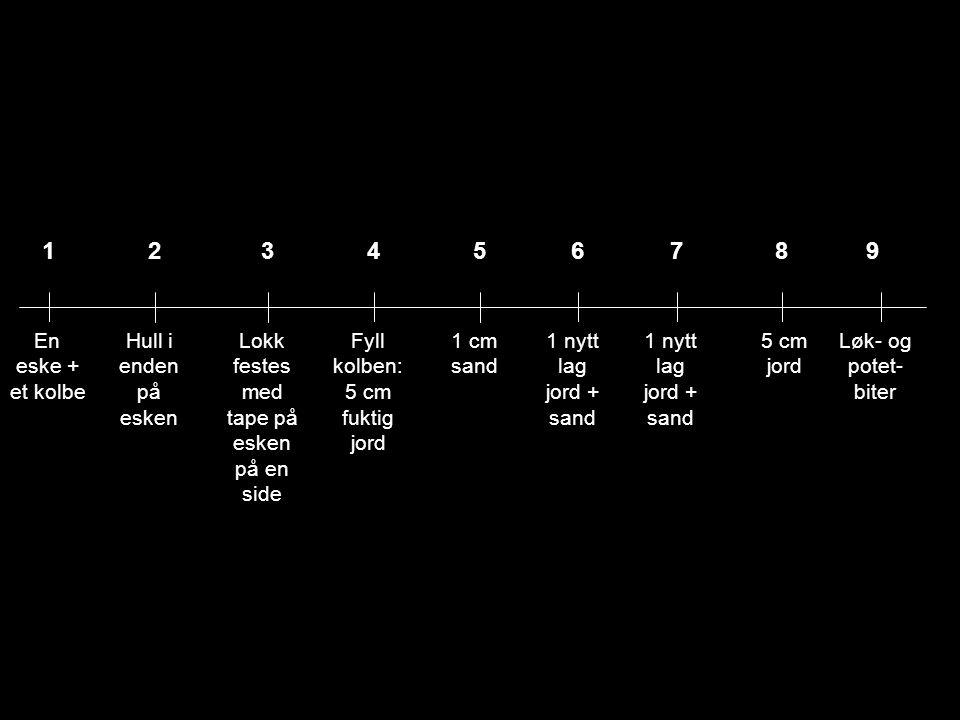 1 En eske + et kolbe Hull i enden på esken 23 Lokk festes med tape på esken på en side 4 Fyll kolben: 5 cm fuktig jord 5 1 cm sand 6 1 nytt lag jord +