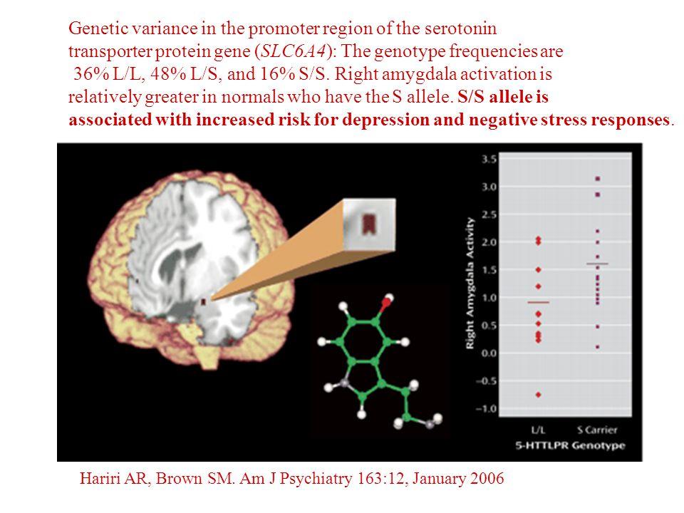 Hariri AR, Brown SM. Am J Psychiatry 163:12, January 2006 Genetic variance in the promoter region of the serotonin transporter protein gene (SLC6A4):