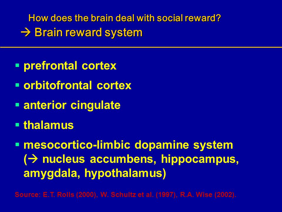How does the brain deal with social reward?  Brain reward system How does the brain deal with social reward?  Brain reward system  prefrontal corte