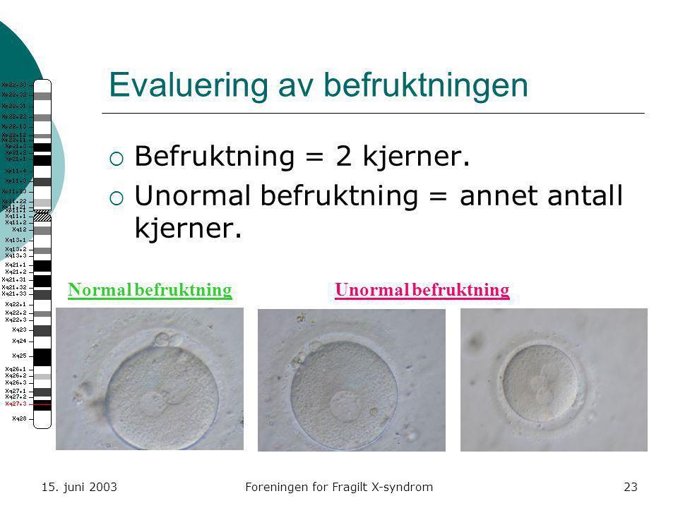 15. juni 2003Foreningen for Fragilt X-syndrom23 Evaluering av befruktningen  Befruktning = 2 kjerner.  Unormal befruktning = annet antall kjerner. N