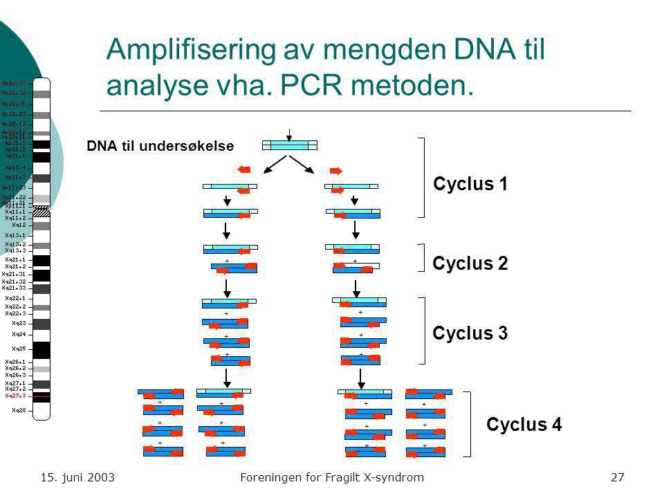 15. juni 2003Foreningen for Fragilt X-syndrom27 Amplifisering av mengden DNA til analyse vha. PCR metoden. DNA til undersøkelse Cyclus 1 Cyclus 2 Cycl