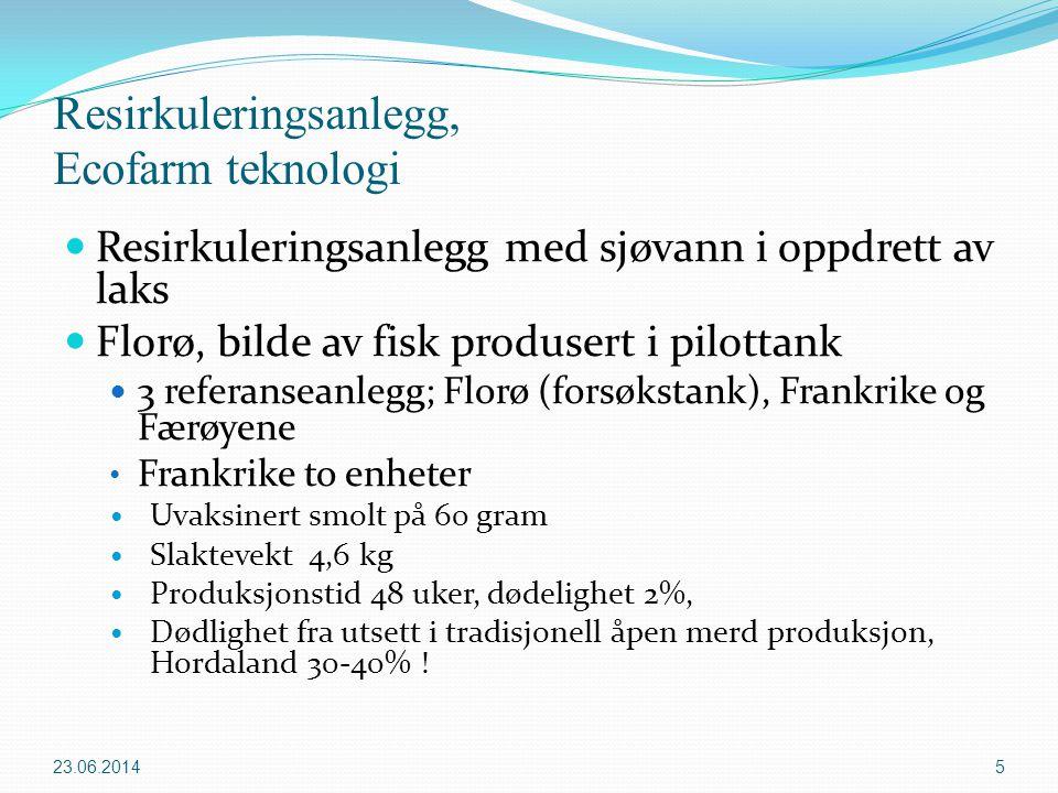 Resirkuleringsanlegg, Ecofarm teknologi  Resirkuleringsanlegg med sjøvann i oppdrett av laks  Florø, bilde av fisk produsert i pilottank  3 referan