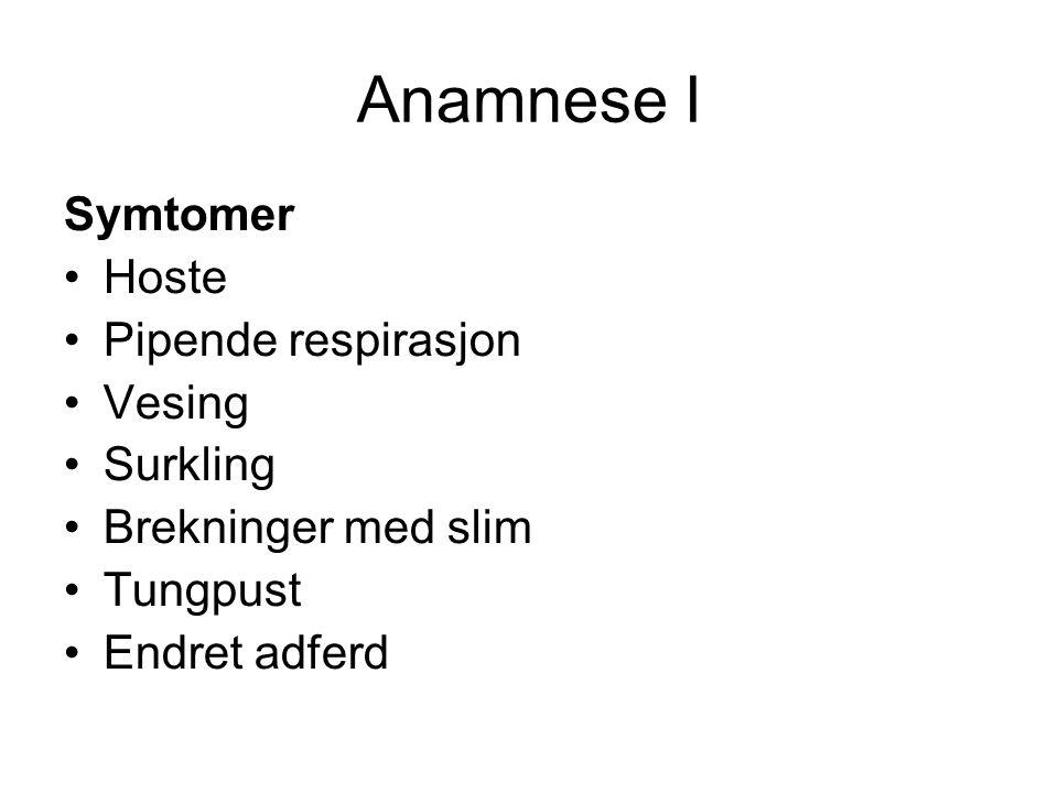 Anamnese I Symtomer •Hoste •Pipende respirasjon •Vesing •Surkling •Brekninger med slim •Tungpust •Endret adferd