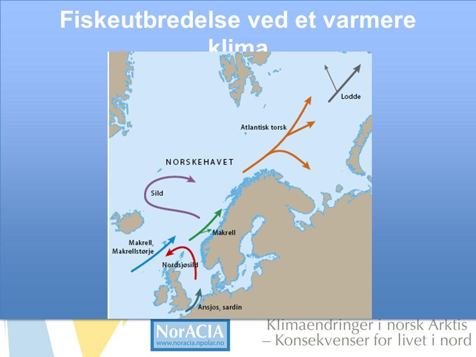 limaendringer i norsk Arktis – Knsekvenser for livet i nord Fiskeutbredelse ved et varmere klima