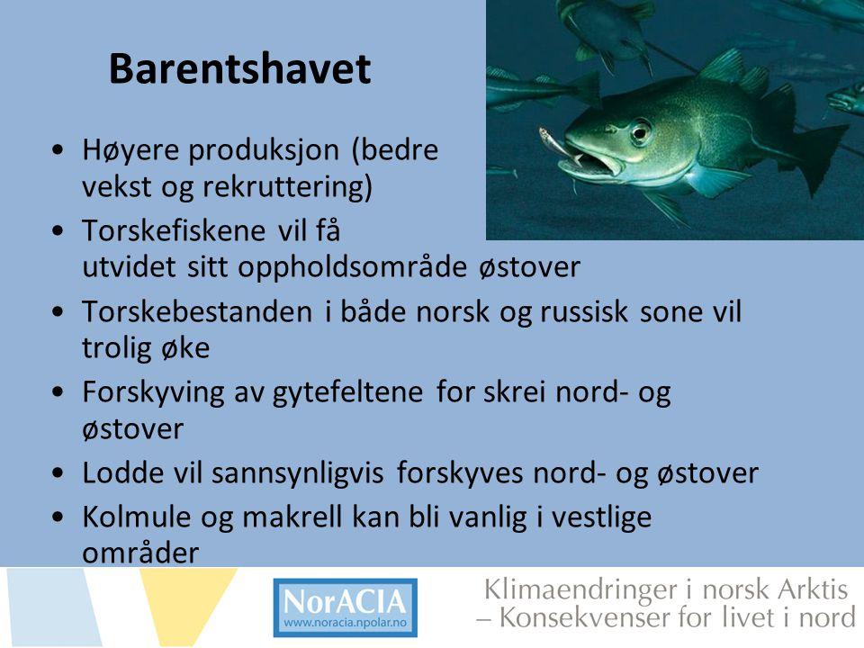 limaendringer i norsk Arktis – Knsekvenser for livet i nord Barentshavet •Høyere produksjon (bedre vekst og rekruttering) •Torskefiskene vil få utvide