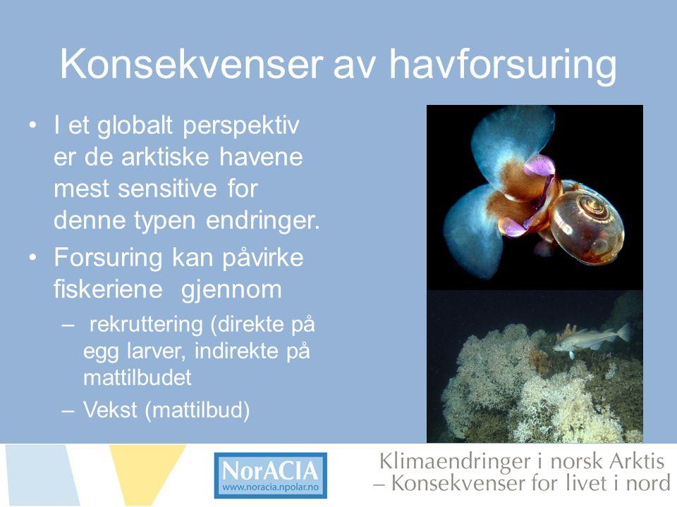 limaendringer i norsk Arktis – Knsekvenser for livet i nord Konsekvenser av havforsuring •I et globalt perspektiv er de arktiske havene mest sensitive
