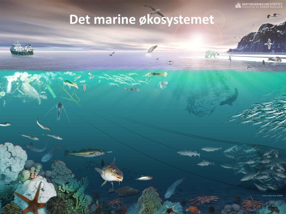 limaendringer i norsk Arktis – Knsekvenser for livet i nord The Marine Ecosystem Det marine økosystemet