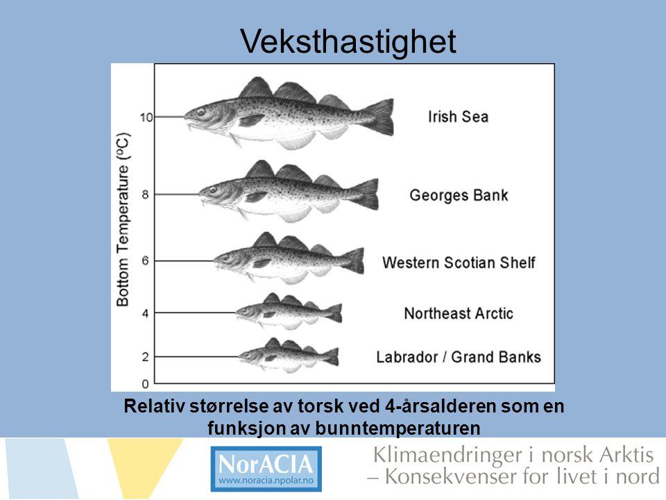 limaendringer i norsk Arktis – Knsekvenser for livet i nord Relativ størrelse av torsk ved 4-årsalderen som en funksjon av bunntemperaturen Veksthasti