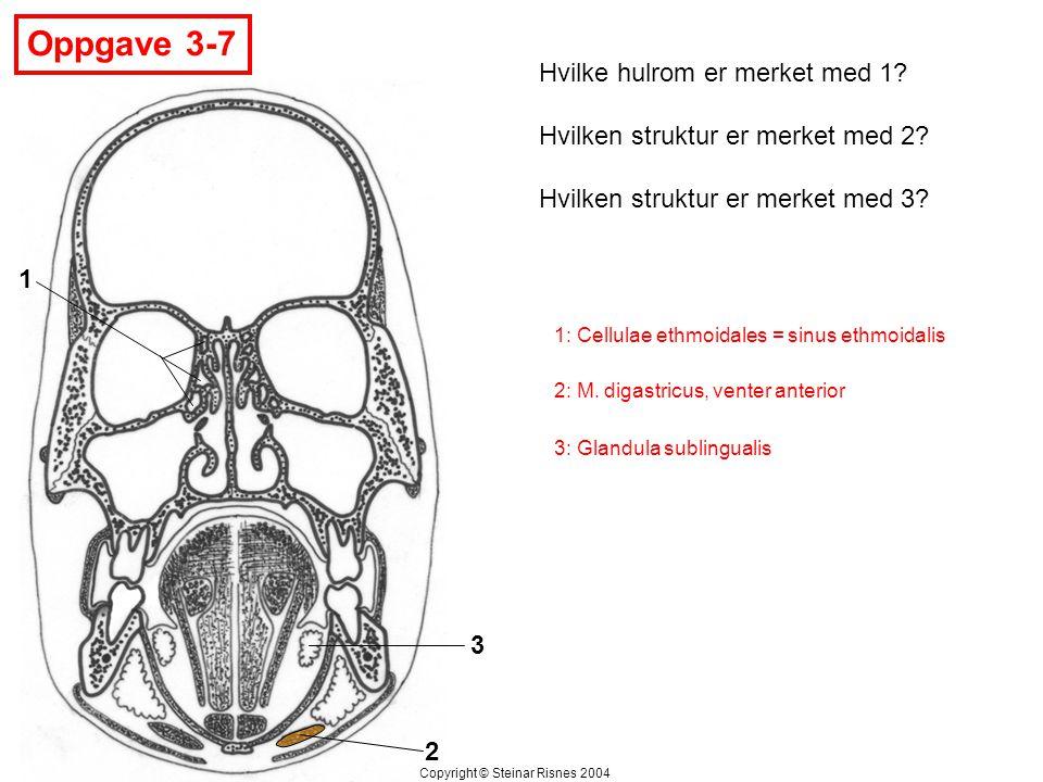 Oppgave 3-7 1 2 3 Hvilke hulrom er merket med 1? Hvilken struktur er merket med 2? Hvilken struktur er merket med 3? Copyright © Steinar Risnes 2004 1