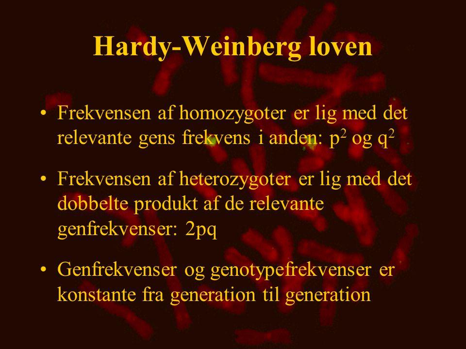 Hardy-Weinberg loven • SS: p  p = 0,56  0,56 = 0,314 • FF: q  q = 0,44  0,44 = 0,194 • SF: 2pq = 2  0,56  0,44 = 0,493 Genotypefrekvens: