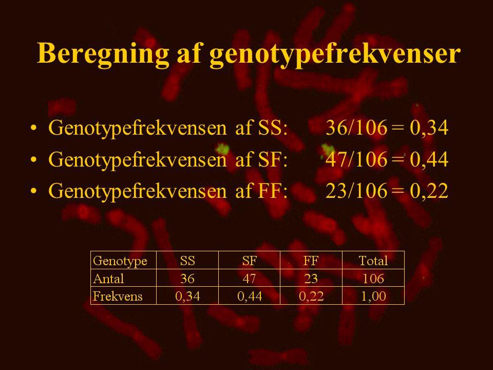 Beregning af genfrekvenser •Genfrekvens ud fra antal •Genfrekvens ud fra proportioner