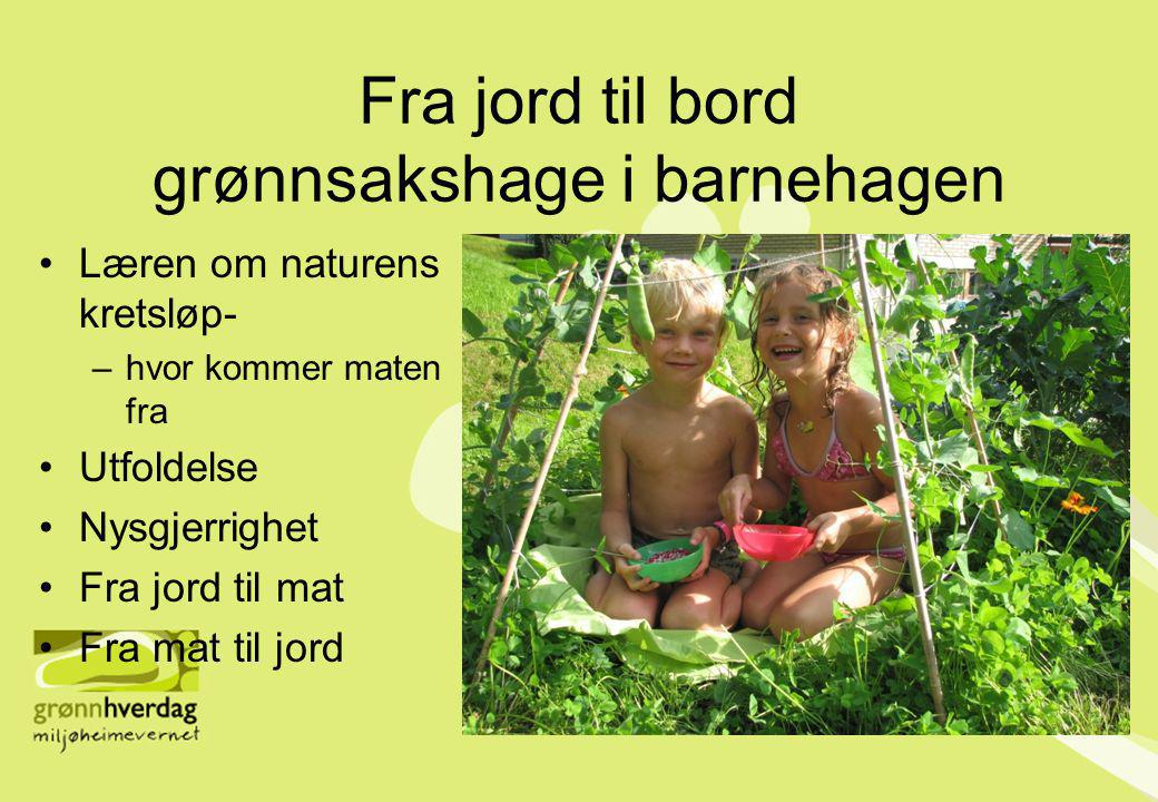 Fra jord til bord grønnsakshage i barnehagen •Læren om naturens kretsløp- –hvor kommer maten fra •Utfoldelse •Nysgjerrighet •Fra jord til mat •Fra mat til jord