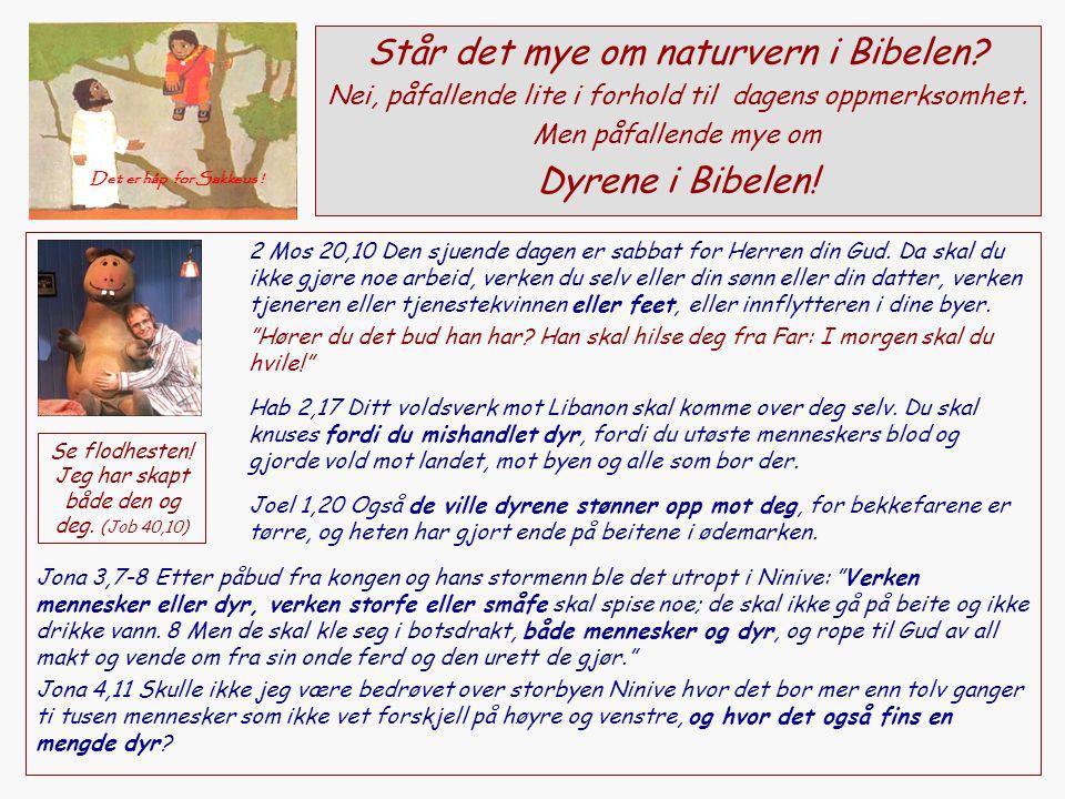 Står det mye om naturvern i Bibelen? Nei, påfallende lite i forhold til dagens oppmerksomhet. Men påfallende mye om Dyrene i Bibelen! 2 Mos 20,10 Den