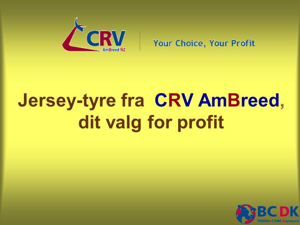 Jersey-tyre fra CRV AmBreed, dit valg for profit