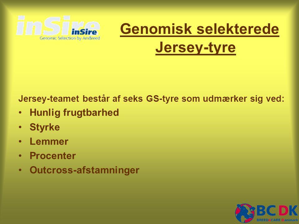 Genomisk selekterede Jersey-tyre Jersey-teamet består af seks GS-tyre som udmærker sig ved: •Hunlig frugtbarhed •Styrke •Lemmer •Procenter •Outcross-afstamninger