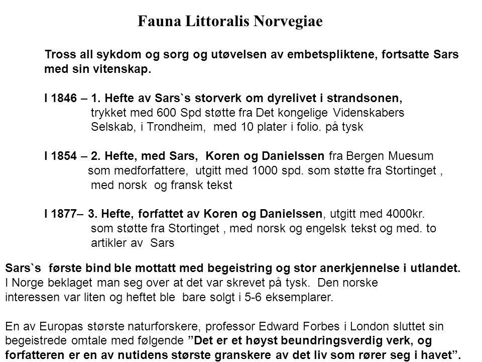 Fauna Littoralis Norvegiae Tross all sykdom og sorg og utøvelsen av embetspliktene, fortsatte Sars med sin vitenskap. I 1846 – 1. Hefte av Sars`s stor