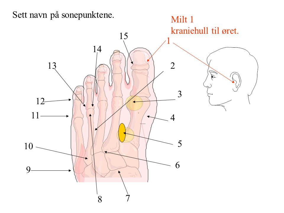 Milt 1 kraniehull til øret. Sett navn på sonepunktene. 1 2 3 4 5 6 7 8 9 10 11 12 13 14 15
